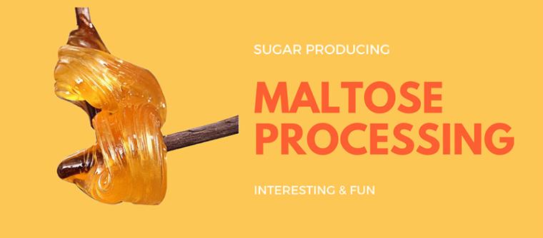 Maltose Processing